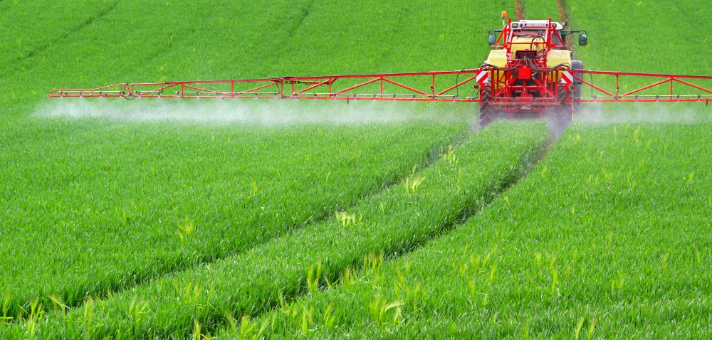 Odchwaszczanie zbóż jesienią?
