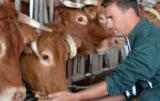 Grupy producenckie: czy hodowcy bydła mięsnego powinni się zrzeszać?