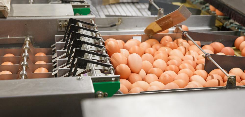 Ceny jajek 2020 przed Świętami Wielkiej Nocy – sprawdź!