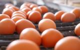 Rynek drobiu w końcu 2016: ceny jaj w górę, ceny brojlerów w dół