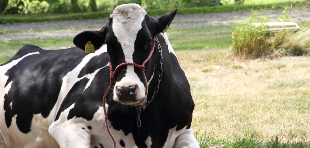 Czy produkcja mleka się opłaca?