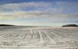 konferencje zimowe syngenta
