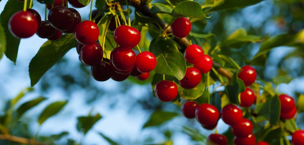Silne wsparcie dla rynku owoców iwarzyw [Aktualności]