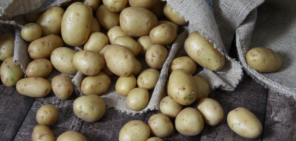 Giełda Bronisze. Ceny warzyw spadają