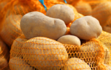 Światowa produkcja ziemniaka
