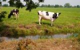 Zatrucie bydła azotanami i azotynami