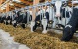 dodatki paszowe dla bydła