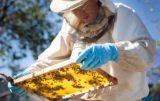 konferencja dla pszczelarzy
