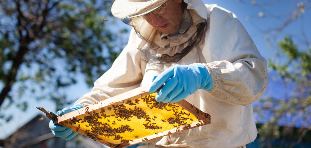 Pierwsza konferencja dla pszczelarzy w2017!