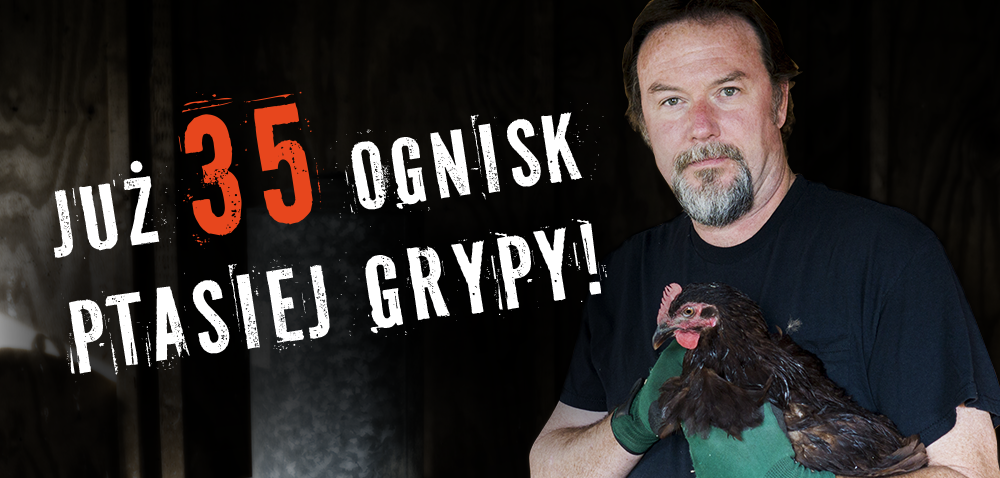Rekompensaty za ptasią grypę: 30 mln zł dla drobiarzy!