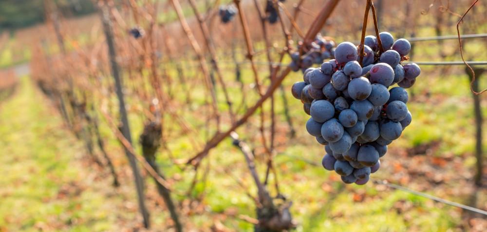Winiarze muszą złożyć deklaracje ozbiorach!