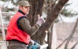 Wycinka drzew na własnej posesji będzie łatwiejsza!