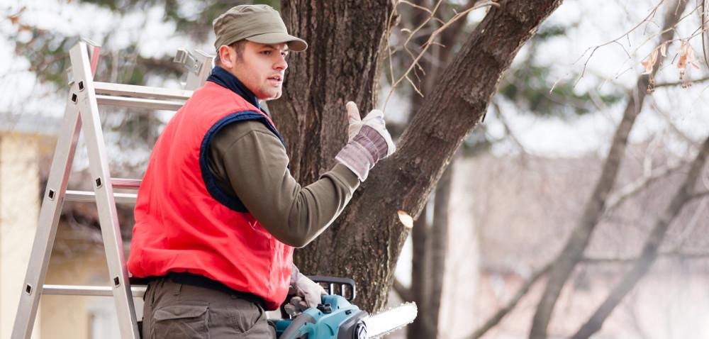 Wycinka drzew na własnej posesji od 2017 będzie łatwiejsza!
