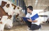 Szerzy się choroba guzowatej skóry bydła (LSD): co planuje FAO?