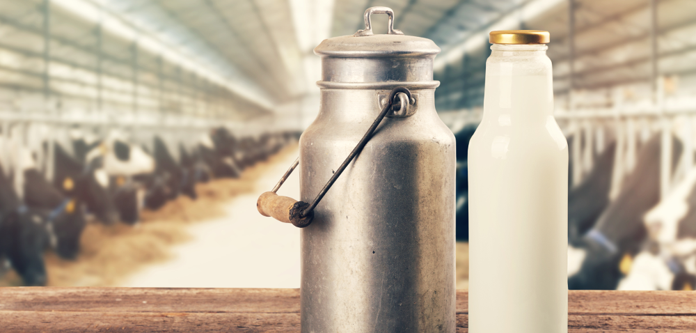 Artykuły mleczarskie podrożały – co najbardziej?