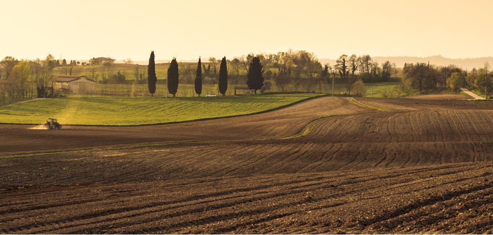 Nawożenie fosforem iazotem: otym warto pamiętać