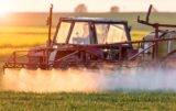 Chwasty w zbożach: jaki herbicyd zastosować wiosną?