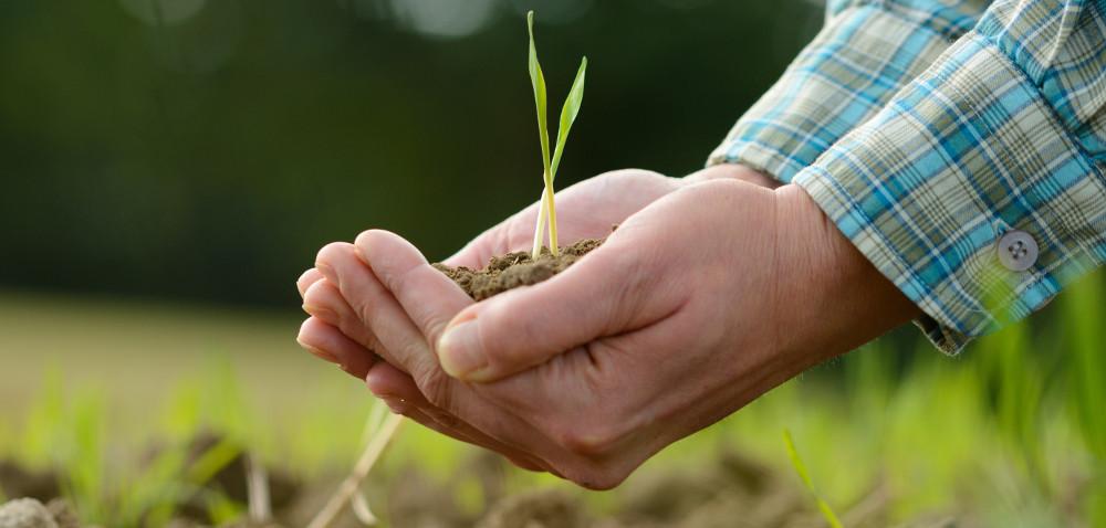 Grupa producentów rolnych – jak ją utworzyć?