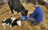 Farm-O-San reviva w okresie okołowycieleniowym