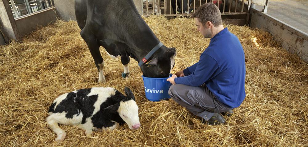 Pójło Farm-O-San Reviva: zastrzyk energii wokresie okołowycieleniowym
