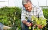 Ochrona warzyw przed szkodnikami i chorobami: nowości na 2017!