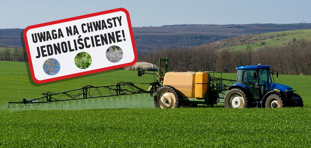 Elastyczne zabiegi herbicydami na chwasty jednoliścienne