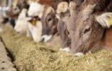 zakaz stosowania pasz GMO