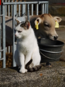 zakaz wstępu psów ikotów do budynków gospodarczych