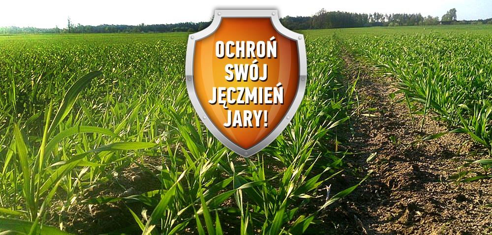 Ochrona fungicydowa zbóż jarych już od siewu
