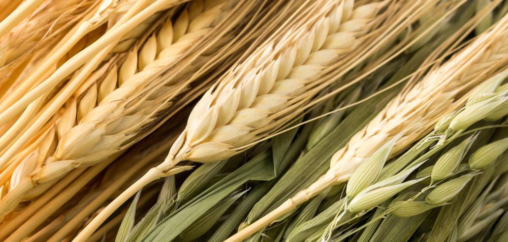 Jakie będą ceny zbóż w2017? Ceny aktualne iprognozy