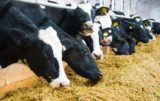 OSM Piątnica stawia na mleko bez GMO