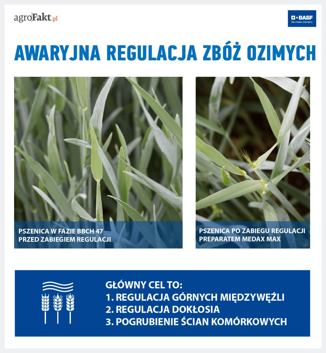 regulacja zbóż ozimych