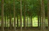 Oxytree: drzewa przyszłości