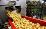 wparcie dla przetwórstwa ziemniaków