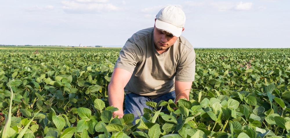 Ta uprawa się opłaca! Skąd wziąć nasiona soi?