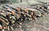 kary za wycinkę drzew
