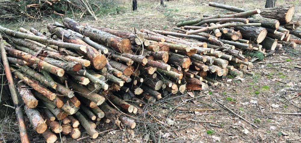 Kary za wycinkę drzew: dla kogo iza co?