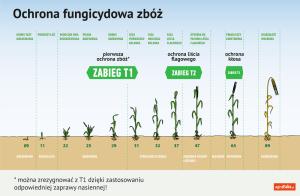 ochrona fungicydowa zbóż - zabieg t1, t2, t3