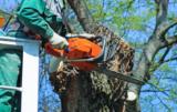 Czy będzie trzeba płacić za wycięcie drzew?