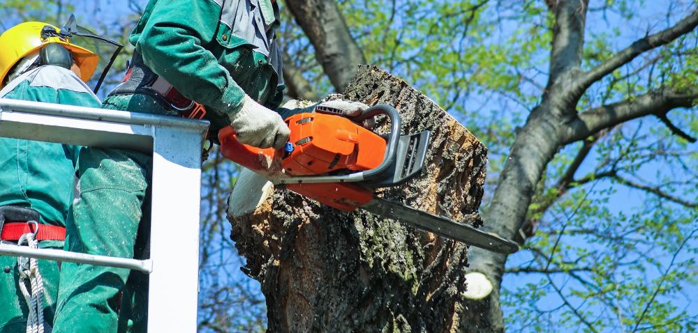 Wycięcie drzewa możliwe na nowych zasadach