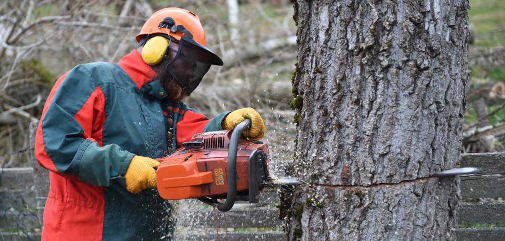 Wycinka drzew – niebawem nowe przepisy!