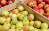 Jak sytuację na rynku jabłek oceniają sadownicy?