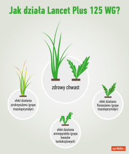 lancet 125 wg - herbicyd do ochrony zbóż
