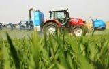 Ochrona herbicydowa zbóż a jakość ziarna