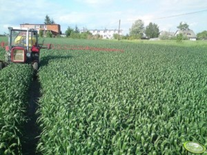 dokarmianie zbóż t2