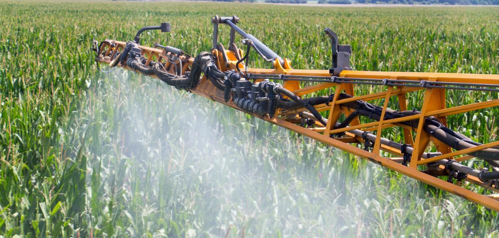 Skuteczność ochrony kukurydzy przed zachwaszczeniem