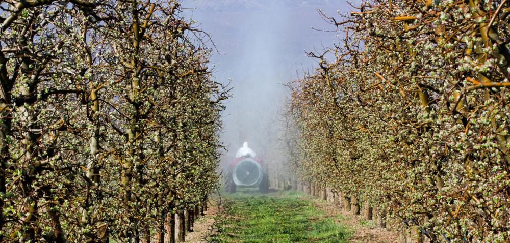 Opryskiwanie sadów we wczesnej fazie rozwoju