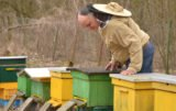 pasieka pszczelarstwo