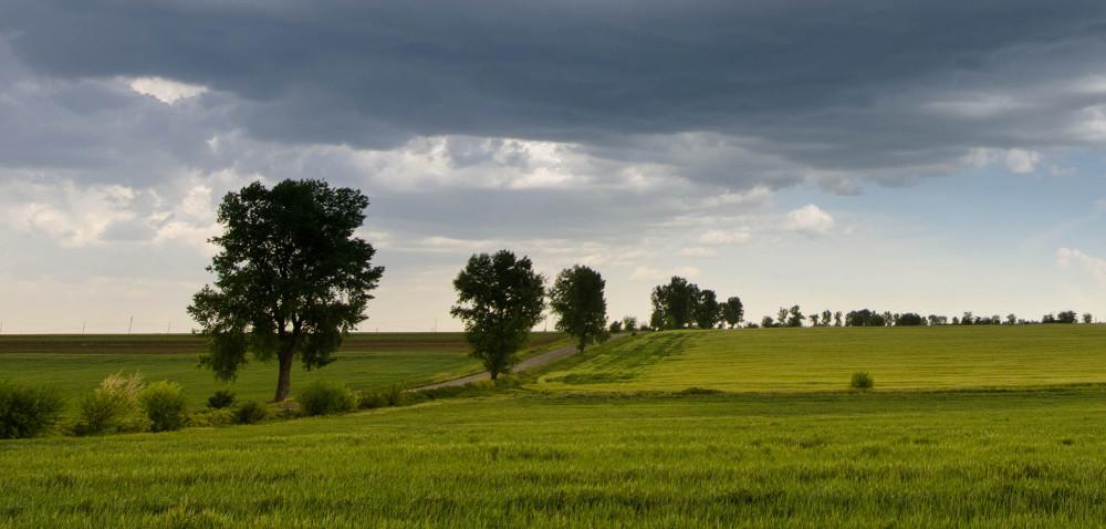 Zasiłki dla rolników: będą kary za nieterminowe wypłaty [AKTUALNOŚCI]