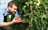 Zatrudnianie pracowników sezonowych do zbioru warzyw